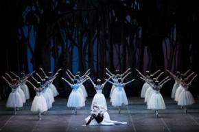 Teatro Regio Torino, 13 XII 2014 (Giselle, ballet Nacional de Cuba) 5