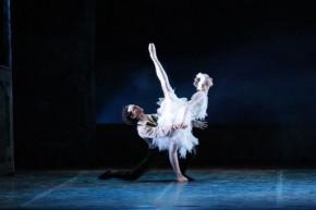 Torino, Teatro Nuovo, 12 XII 2014 (Il Balletto del Sud nel Lago dei cigni) 4